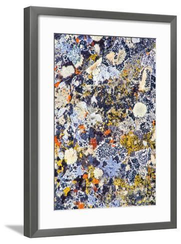 Colorful Lichens, a Symbiotic Association of Cyanobacteria or Green Algae and Filamentous Fungi-Tom Murphy-Framed Art Print