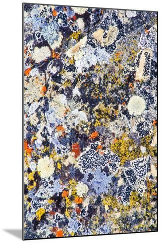 Colorful Lichens, a Symbiotic Association of Cyanobacteria or Green Algae and Filamentous Fungi-Tom Murphy-Mounted Photographic Print
