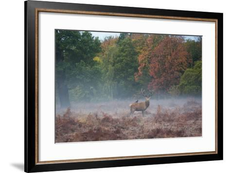 A Red Deer Stag Stands Against an Autumn Backdrop with a Jackdaw Perched on His Back at Sunrise-Alex Saberi-Framed Art Print