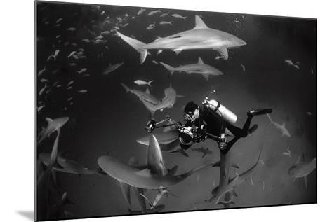Caribbean Reef Sharks Swimming in a Frenzy around an Underwater Photographer-Jennifer Hayes-Mounted Photographic Print