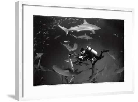 Caribbean Reef Sharks Swimming in a Frenzy around an Underwater Photographer-Jennifer Hayes-Framed Art Print