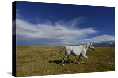 A Horse on a Ranch Near Mosca-Raul Touzon-Stretched Canvas Print