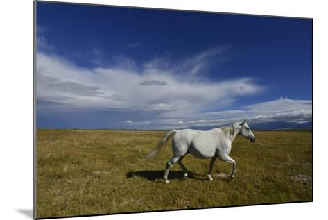 A Horse on a Ranch Near Mosca-Raul Touzon-Mounted Photographic Print