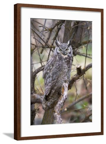 Portrait of a Great Horned Owl, Bubo Virginianus, Perched on a Tree Branch-Robbie George-Framed Art Print