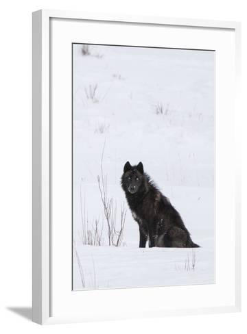 A Wolf Waiting in Snow-Tom Murphy-Framed Art Print