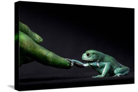 A Waxy Monkey Frog, Phyllomedusa Sauvagii, Reaches Out to Grab a Finger Painted Green-Robin Moore-Stretched Canvas Print
