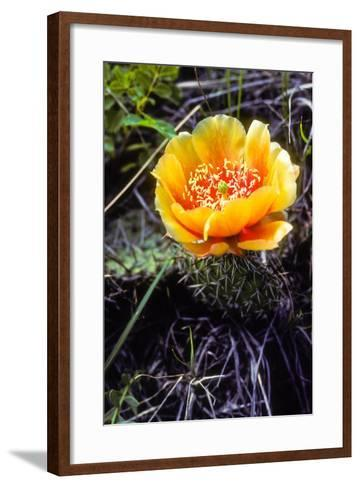 The Flower of a Prickly Pear Cactus-Tom Murphy-Framed Art Print