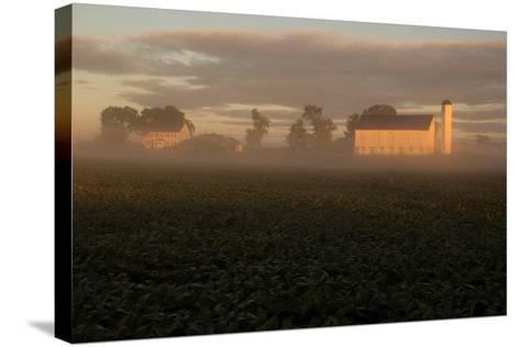 Sunrise Casts a Golden Tint on a Farm and Misty Cornfield-Stephen St^ John-Stretched Canvas Print