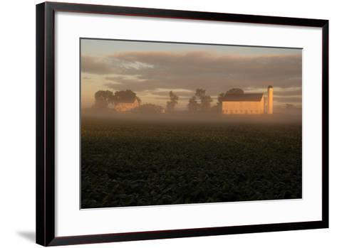 Sunrise Casts a Golden Tint on a Farm and Misty Cornfield-Stephen St^ John-Framed Art Print