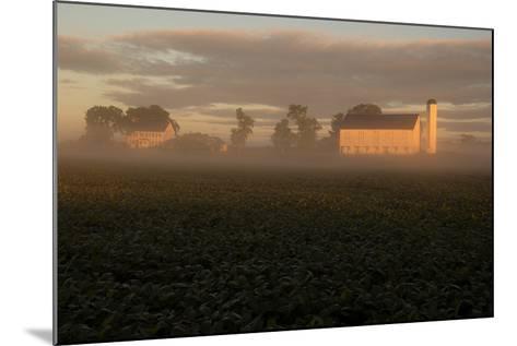 Sunrise Casts a Golden Tint on a Farm and Misty Cornfield-Stephen St^ John-Mounted Photographic Print