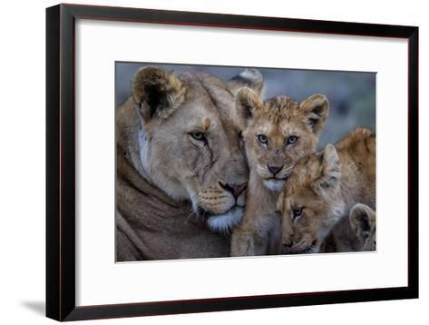 A Remote Car Captures Lion Cubs from the Vumbi Pride with a Lioness-Michael Nichols-Framed Art Print
