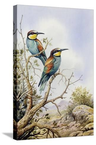 Bee-Eaters-Carl Donner-Stretched Canvas Print