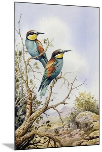 Bee-Eaters-Carl Donner-Mounted Giclee Print