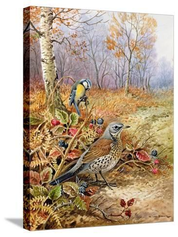 Fieldfare and Blue Tit-Carl Donner-Stretched Canvas Print