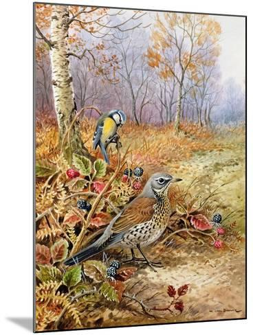 Fieldfare and Blue Tit-Carl Donner-Mounted Giclee Print