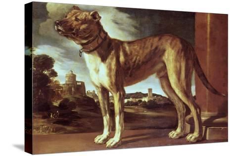 Portrait of a Dog-Guglielmo Ciardi-Stretched Canvas Print