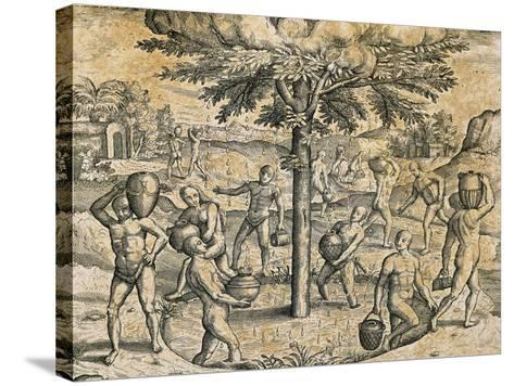 Natives of the Canary Islands, 1590-Theodore de Bry-Stretched Canvas Print