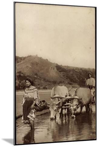 Rumänien, Wasserbüffel Ziehen Einen Pflug Über Das Wasser--Mounted Giclee Print