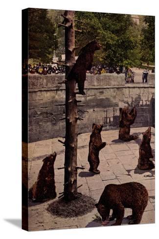 Bern Schweiz, Zoo, Blick in Den B?rengraben, Braunb?ren, Besucher--Stretched Canvas Print