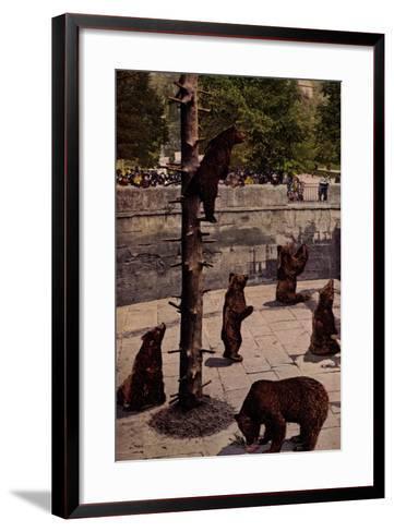 Bern Schweiz, Zoo, Blick in Den B?rengraben, Braunb?ren, Besucher--Framed Art Print