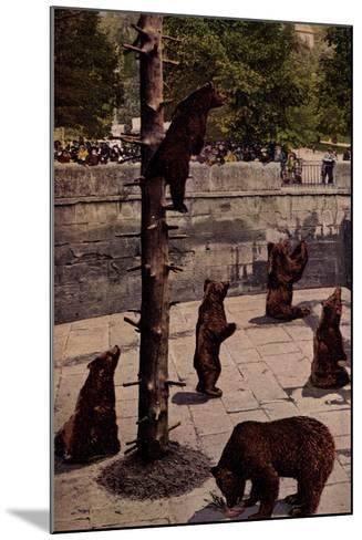 Bern Schweiz, Zoo, Blick in Den B?rengraben, Braunb?ren, Besucher--Mounted Giclee Print