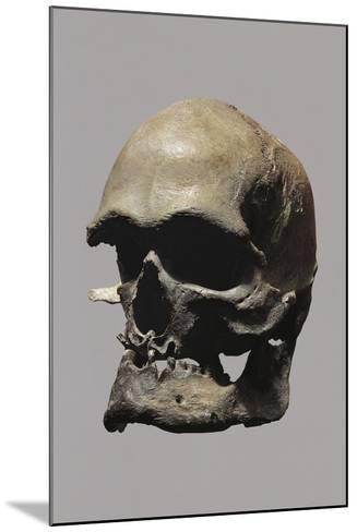 Cro-Magnon Type Skull of Homo Sapiens--Mounted Giclee Print