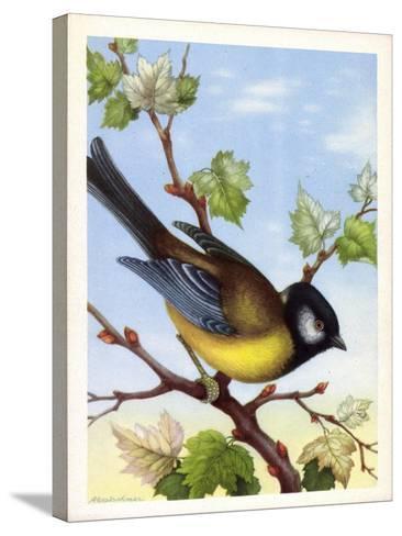 Künstler Kohlmeise, Parus Major, Vogel, Paridae--Stretched Canvas Print