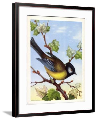 Künstler Kohlmeise, Parus Major, Vogel, Paridae--Framed Art Print