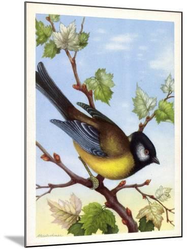 Künstler Kohlmeise, Parus Major, Vogel, Paridae--Mounted Giclee Print