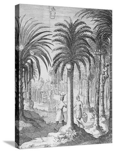 Bethel and Arek Plants, Whose Leaves and Nuts are Chewed by Indians, Asia--Stretched Canvas Print