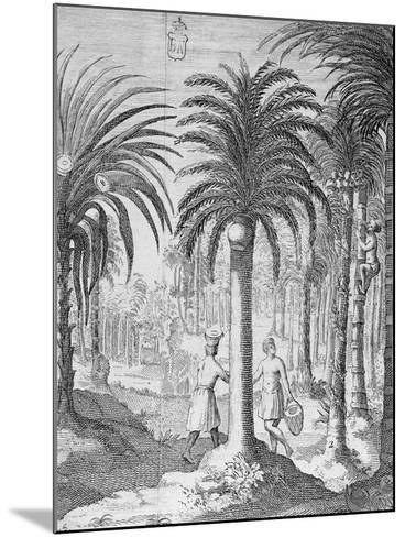 Bethel and Arek Plants, Whose Leaves and Nuts are Chewed by Indians, Asia--Mounted Giclee Print