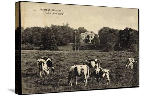 Naarden Bussum Nordholland, Kühe Auf Der Wiese, Huize Flevo Rama--Stretched Canvas Print