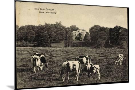 Naarden Bussum Nordholland, Kühe Auf Der Wiese, Huize Flevo Rama--Mounted Giclee Print