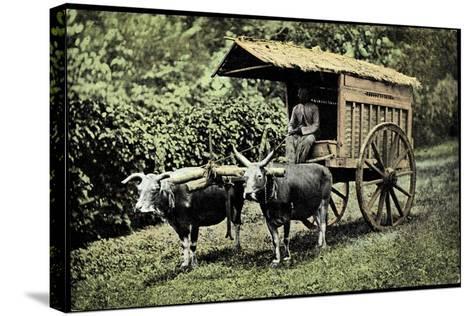 Een Transportwagen Met Karbouwen, Glinding Genaamd, Ochsenkarren--Stretched Canvas Print