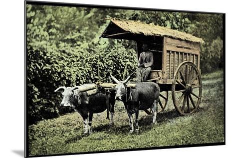 Een Transportwagen Met Karbouwen, Glinding Genaamd, Ochsenkarren--Mounted Giclee Print