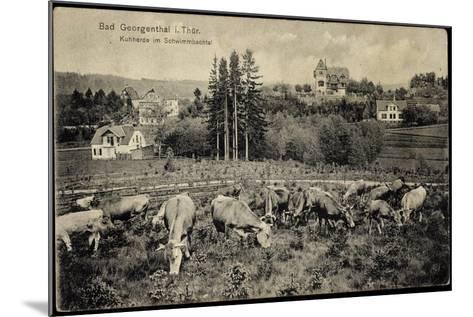 Georgenthal Thüringen, Kuhherde Im Schwimmbachtal, Berge--Mounted Giclee Print