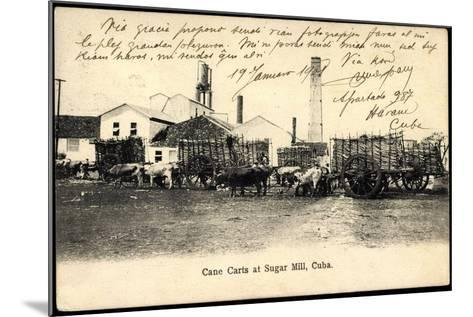 Kuba, Cane Carts at Sugar Hill, Rinder Herde Als Lasttiere--Mounted Giclee Print