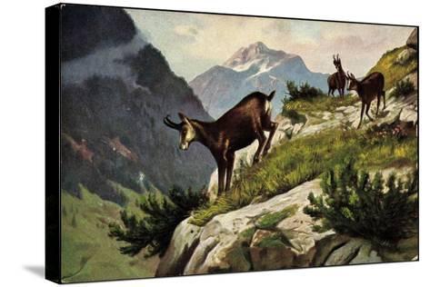 Künstler Bergziegen an Einem Abhang, Gebirge, Abgrund--Stretched Canvas Print