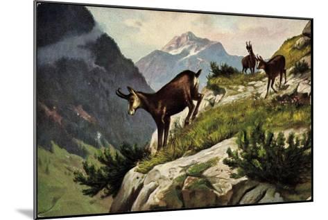 Künstler Bergziegen an Einem Abhang, Gebirge, Abgrund--Mounted Giclee Print