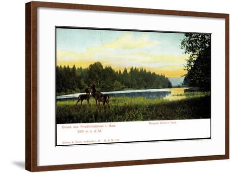 Friedrichsbrunn I. Harz, Bergrath Müller's Teich, Hirsche--Framed Art Print