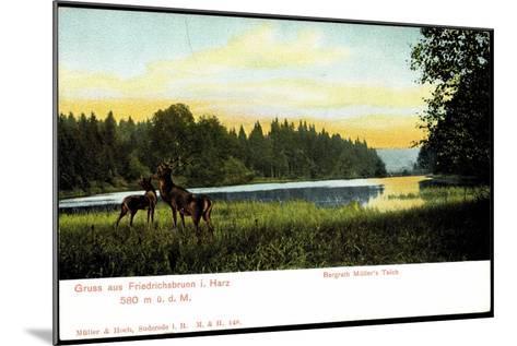 Friedrichsbrunn I. Harz, Bergrath Müller's Teich, Hirsche--Mounted Giclee Print