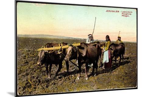 Jerusalem, Laboureurs, Ploughing, Pflügen, Landwirtschaft, Ochsenpflug--Mounted Giclee Print
