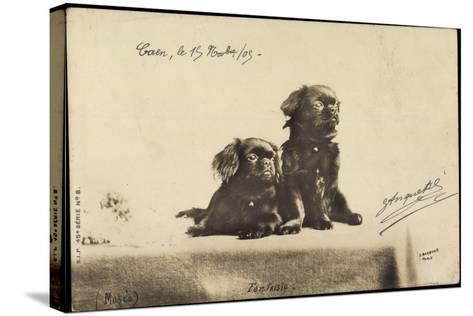 Portrait Von Zwei Hunden, Die Auf Einem Tisch Sitzen--Stretched Canvas Print