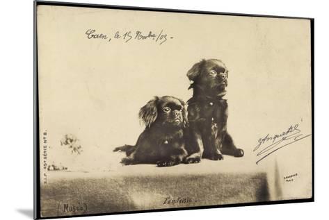 Portrait Von Zwei Hunden, Die Auf Einem Tisch Sitzen--Mounted Giclee Print