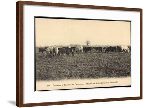 Camargue Vosges, Taureax Et Chevaux, Manade De M. Le Marquis De Baroncelli--Framed Art Print