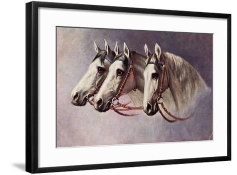 Pferd, Drei Schimmel Aus Dem Seitenprofil Mit Geschirr--Framed Art Print