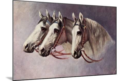 Pferd, Drei Schimmel Aus Dem Seitenprofil Mit Geschirr--Mounted Giclee Print