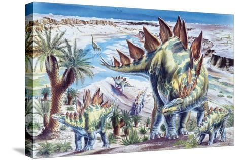 Illustration Representing Group of Stegosaurus in Jurassic Landscape--Stretched Canvas Print