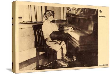 Portrait Eines Schimpansen, Der Klavier Spielt--Stretched Canvas Print