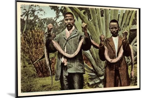 Matlala Südafrika, Gefährliche Jagdbeute, Einheimische Erlegen Boa Constrictor--Mounted Giclee Print
